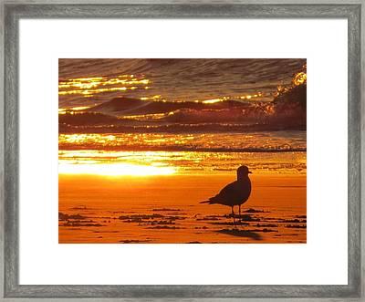 Bird's Paradise Framed Print