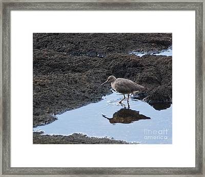 Framed Print featuring the photograph Bird's Reflection by Belinda Greb