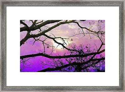 Birds Roosting For Night Framed Print
