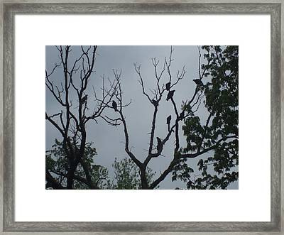 Framed Print featuring the photograph Birds by Fortunate Findings Shirley Dickerson