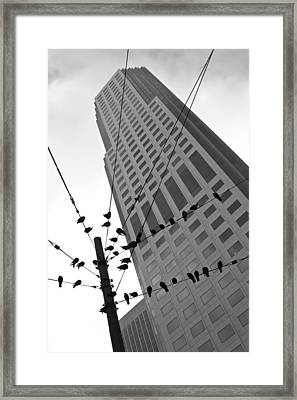Framed Print featuring the photograph Birds Station by Jonathan Nguyen