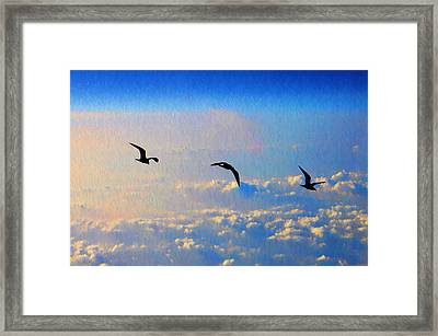 Birdz Framed Print
