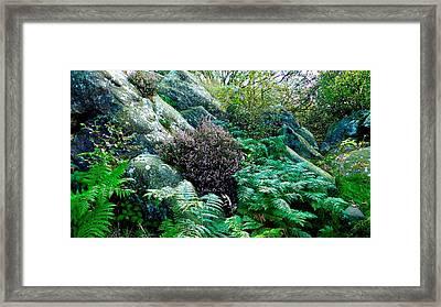 Birk Crag Foliage Framed Print