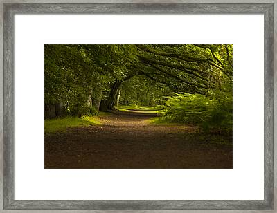 Birnam Woods Landscape Wall Art Framed Print
