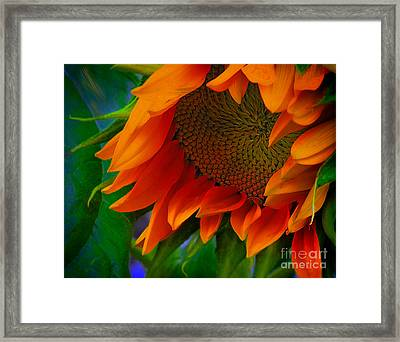 Birth Of A Sunflower Framed Print