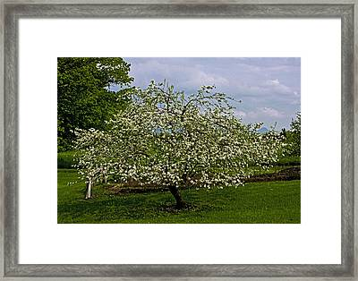 Framed Print featuring the painting Birth Of Apples by John Haldane
