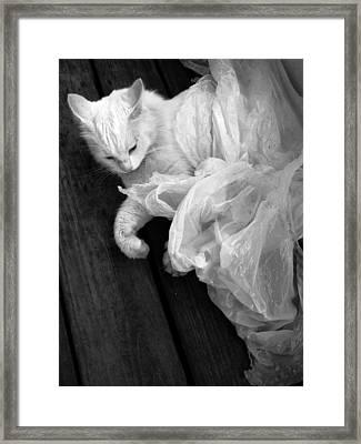 Birth Of The White Cat Framed Print by Darryl  Kravitz