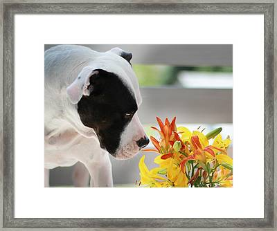 Birthday Bouquet Framed Print