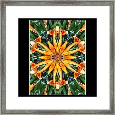 Birthday Lily For Erin Framed Print by Nick Heap