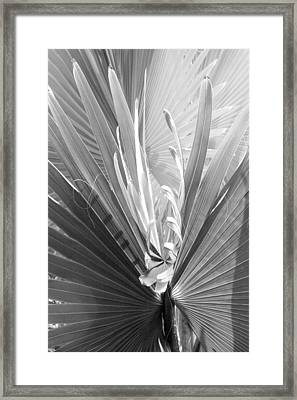 Framed Print featuring the photograph Bismark Palm by Jim Snyder