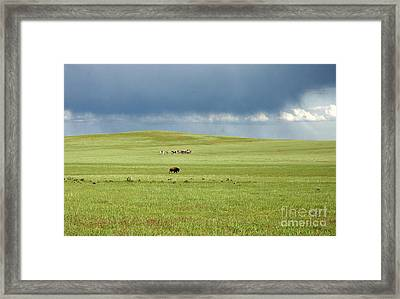 1009a Bison And Riders Framed Print