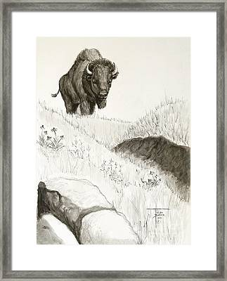 Bison Approach Framed Print