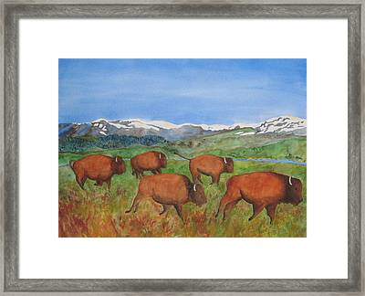 Bison At Yellowstone Framed Print by Patricia Beebe