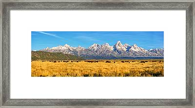 Bison Beneath The Tetons Limited Edition Panorama Framed Print