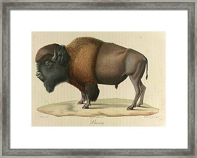 Bison Framed Print by British Library