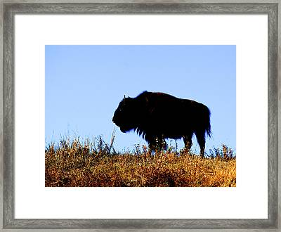 Bison Bull In Silhouette In Lamar Framed Print by Richard Wright