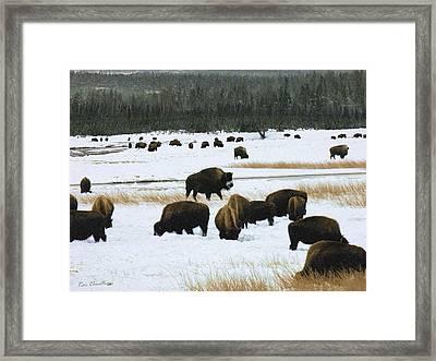 Bison Cows Browsing Framed Print by Kae Cheatham