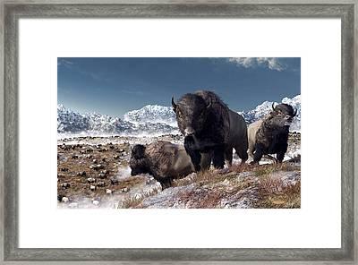 Bison Herd In Winter Framed Print by Daniel Eskridge