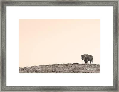 Bison Hill  Framed Print by James BO  Insogna