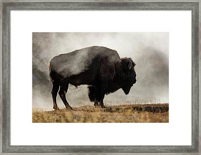 Bison In Mist, Upper Geyser Basin Framed Print