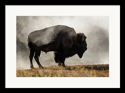 Usa Wildlife Framed Prints