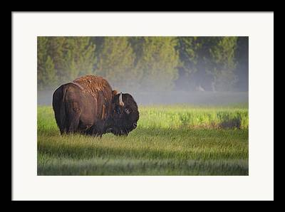 Yellowstone Framed Prints