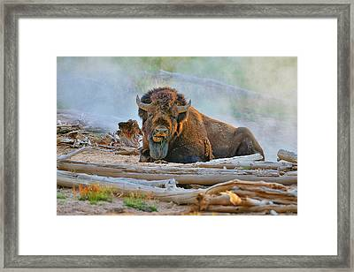 Bison In The Mist Framed Print