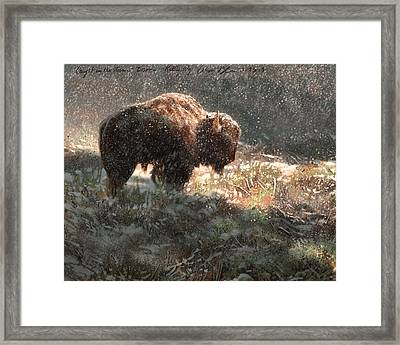 Bison In The Snow Framed Print