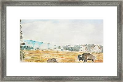 Bison In Yellowstone Framed Print