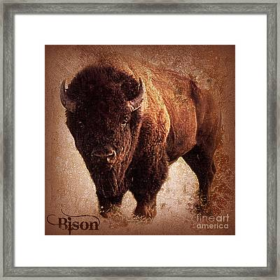 Bison Framed Print by Mindy Bench