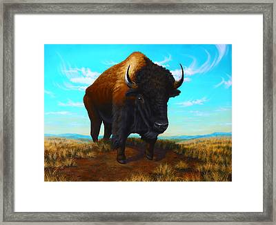Bison On The Knoll Framed Print by Clay Hibbard