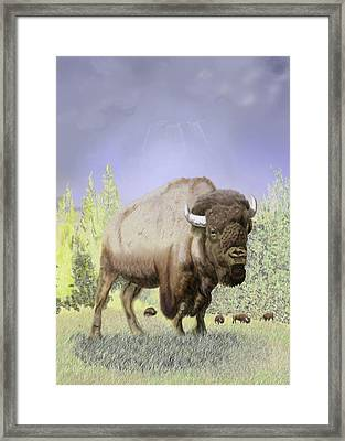 Bison On The Range Framed Print