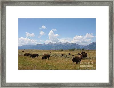 Bison Roaming The West Framed Print by Tammy Venable
