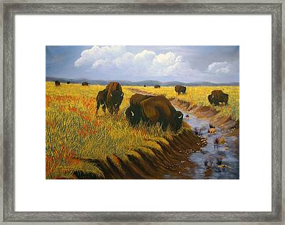 Bison Still Roam The Plains Framed Print