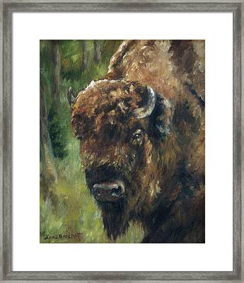 Bison Study - Zero Three Framed Print