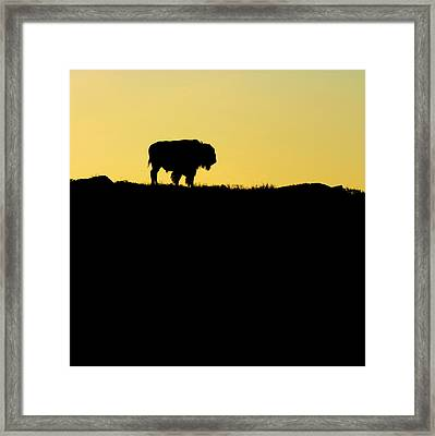 Framed Print featuring the photograph Bison Sunrise by Sonya Lang