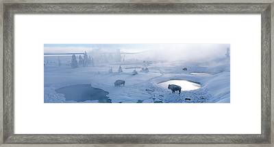 Bison West Thumb Geyser Basin Framed Print by Panoramic Images