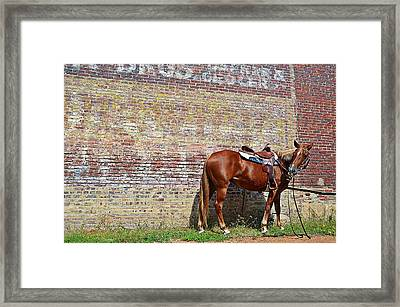 Bite Of Grass Framed Print by Kelly Kitchens