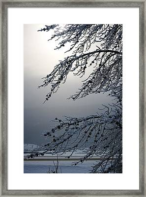 Bitter Cold Framed Print