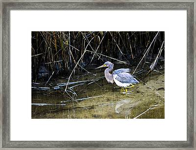 Bittern At Dusk  Framed Print
