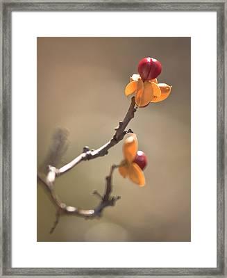 Bittersweet Berry Framed Print