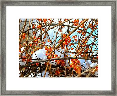 Bittersweet Framed Print by Helene Guertin