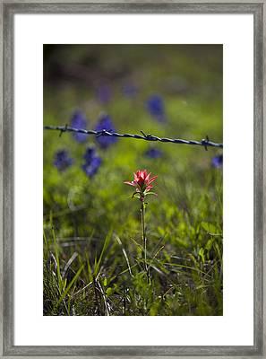 Bittersweet Imagery Framed Print