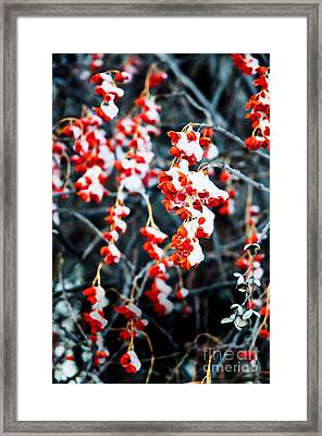 Bittersweet In Snow Framed Print by Tracy Tucker