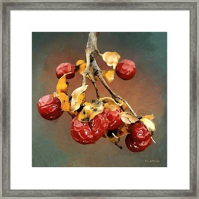 Bittersweet Memories Framed Print by RC DeWinter