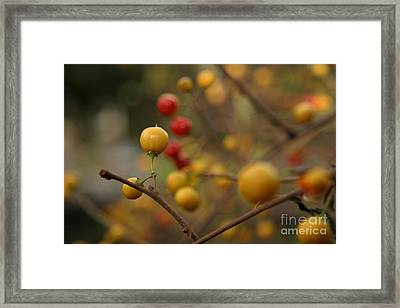 Framed Print featuring the photograph Bittersweet - Near by Kenny Glotfelty