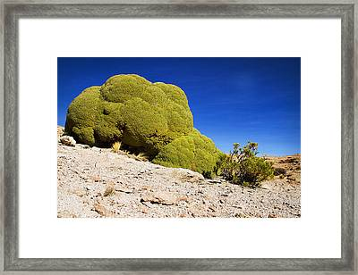 Bizarre Green Plant Bolivia Framed Print by For Ninety One Days
