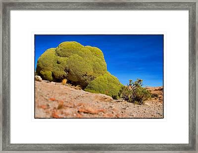 Bizarre Green Plant Bolivia Framed Framed Print by For Ninety One Days