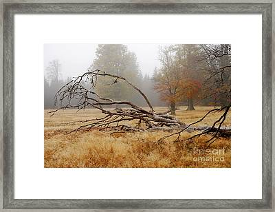 Bizarre Rootage In The Highmoor Framed Print by Karin Stein