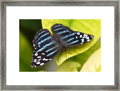 Black And Blue Framed Print by Katherine White